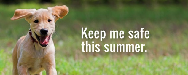 Keeping Dogs Safe in the Heat