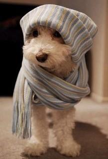 winter-dog
