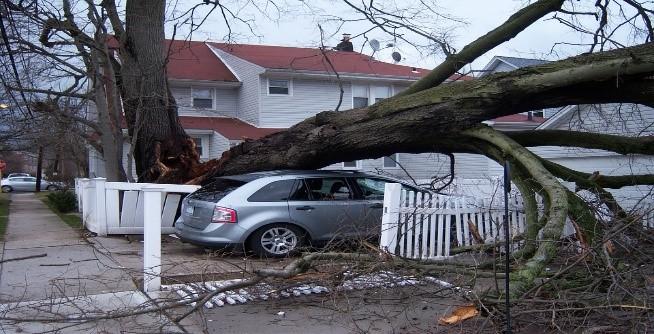 Tree Damage Disaster